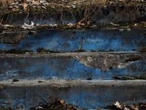 蓝色步丛林与草的从晚年 免版税图库摄影