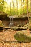 蓝色母鸡在森林在秋天落 免版税库存图片