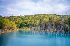 蓝色池塘在北海道 库存图片