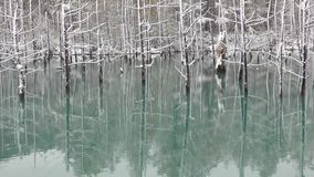 蓝色池塘 影视素材