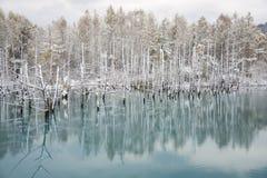 蓝色池塘 库存照片