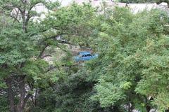 蓝色汽车在绿色树后掩藏了在城市 免版税库存图片