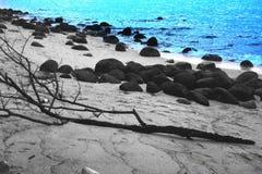 蓝色波浪和树 免版税库存图片