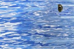 蓝色浪端的白色泡沫反射Abstract湖Coeur d ` Alene爱达荷 免版税库存图片