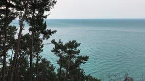 蓝色海、树在前景和轻的天空的镇静看法没有云彩 影视素材