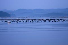 蓝色海湾早晨山平安的海运通知 库存照片