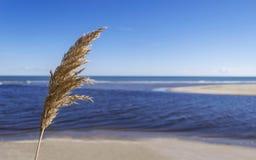 蓝色海的轻微 免版税库存照片