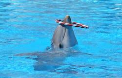 蓝色海豚水 库存图片