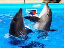蓝色海豚水 库存照片