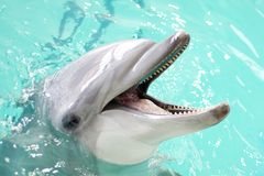蓝色海豚水 免版税图库摄影