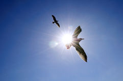 蓝色海鸥天空腾飞 库存照片