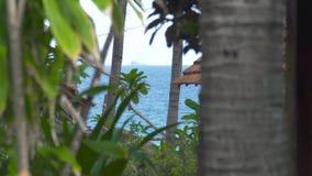 蓝色海,在夏天海滩的棕榈树,绿色热带植物环境美化 热带棕榈树和绿色植物岸的 影视素材