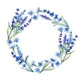 蓝色淡紫色 花卉植物的花 在水彩样式的狂放的春天叶子野花框架 库存图片