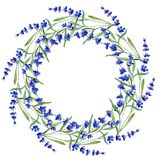 蓝色淡紫色 花卉植物的花 在水彩样式的狂放的春天叶子野花框架 库存照片