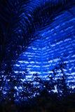 蓝色深 图库摄影