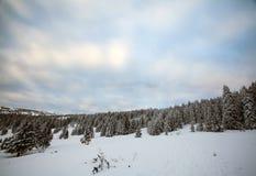 蓝色清楚的冷杉早晨天空多雪的结构树冬天 免版税库存图片