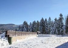 蓝色清楚的冷杉早晨天空多雪的结构树冬天 库存照片