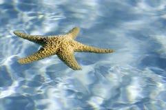 蓝色清楚的浮动的海星水 库存照片