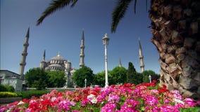 蓝色清真寺在伊斯坦布尔,有树和花的土耳其 股票视频