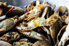 蓝色游泳者螃蟹新鲜的海鲜 免版税库存图片