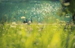 蓝色湖在有花的公园 免版税库存照片