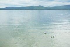 蓝色湖平静的水  免版税库存照片
