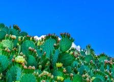 蓝色满天星斗的天空的仙人掌植物 库存照片