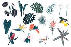 蓝色热带集合、棕榈叶、密林叶子和异乎寻常的花 库存例证