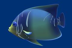 蓝色热带鱼. 免版税图库摄影图片
