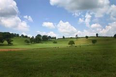 蓝色牧场地天空 库存照片