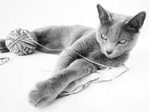 蓝色猫纵向俄语 库存照片