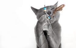 蓝色猫纵向俄语 免版税库存图片