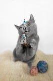 蓝色猫纵向俄语 图库摄影