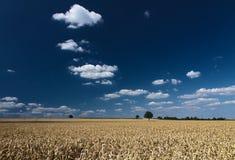 蓝色玉米田pfalz天空 库存照片