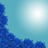 蓝色玫瑰 图库摄影