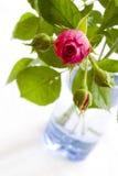 蓝色玻璃粉红色玫瑰色花瓶 免版税库存图片