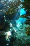 蓝色珊瑚深礁石 免版税库存图片