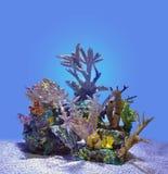 蓝色珊瑚礁被隔绝在水下 库存图片