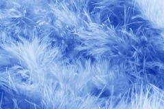 蓝色用羽毛装饰背景-储蓄照片 免版税图库摄影