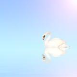 蓝色疣鼻天鹅水 图库摄影