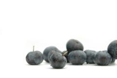 蓝色的浆果 免版税库存图片