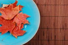 蓝色碗叶子 库存照片