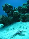 蓝色礁石 免版税图库摄影