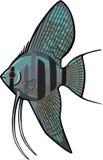 蓝色神仙鱼 向量例证