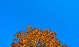 蓝色秋天 库存照片