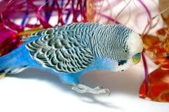蓝色箔鹦鹉闪亮金属片 库存图片