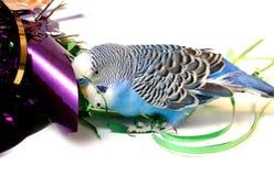 蓝色箔鹦鹉闪亮金属片 库存照片