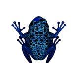 蓝色箭青蛙毒物 库存例证