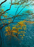 蓝色结构树水 库存图片