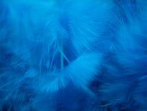 蓝色羽毛纹理 免版税库存图片